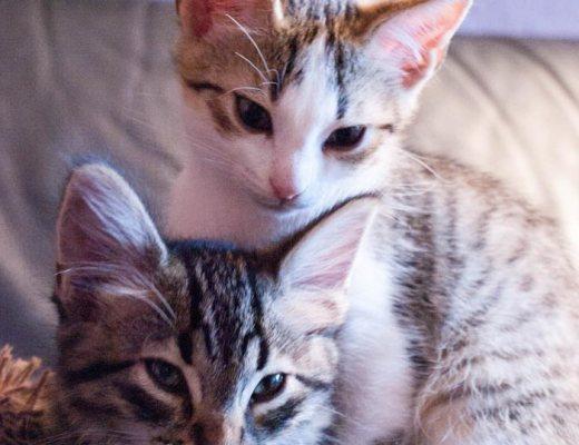 Prendre soin de ses animaux domestiques : mes chatons Tarani et Rasteau