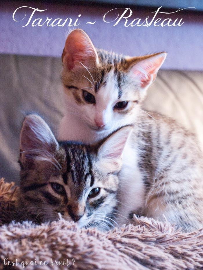 Les chatons sont à la maison