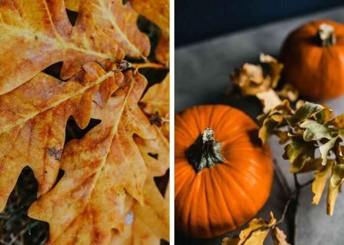 25 raisons d'aimer d'automne