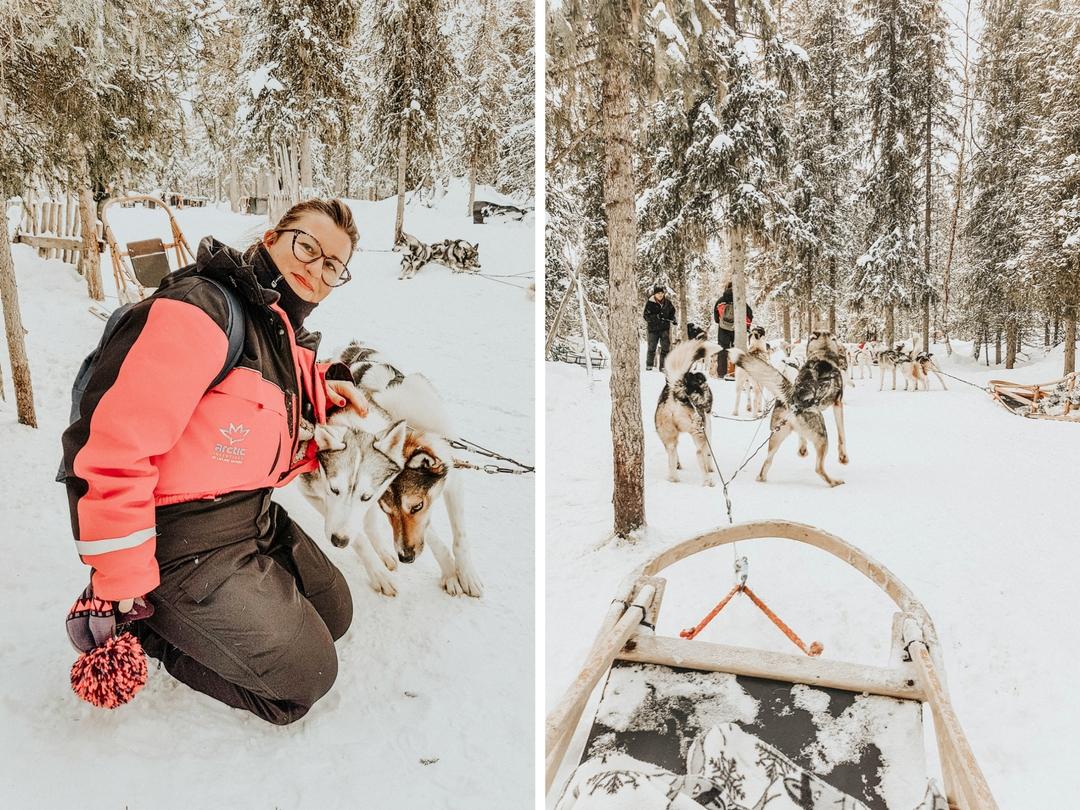 Faire une sortie en chiens de traineau à la montagne
