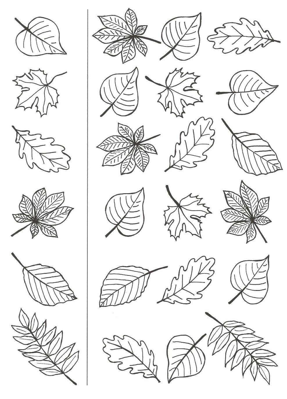 Coloriages automne feuilles