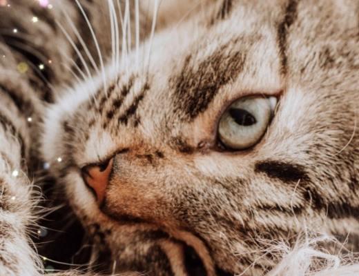 Prendre soin de ses animaux et de sa famille en évitant les parasites
