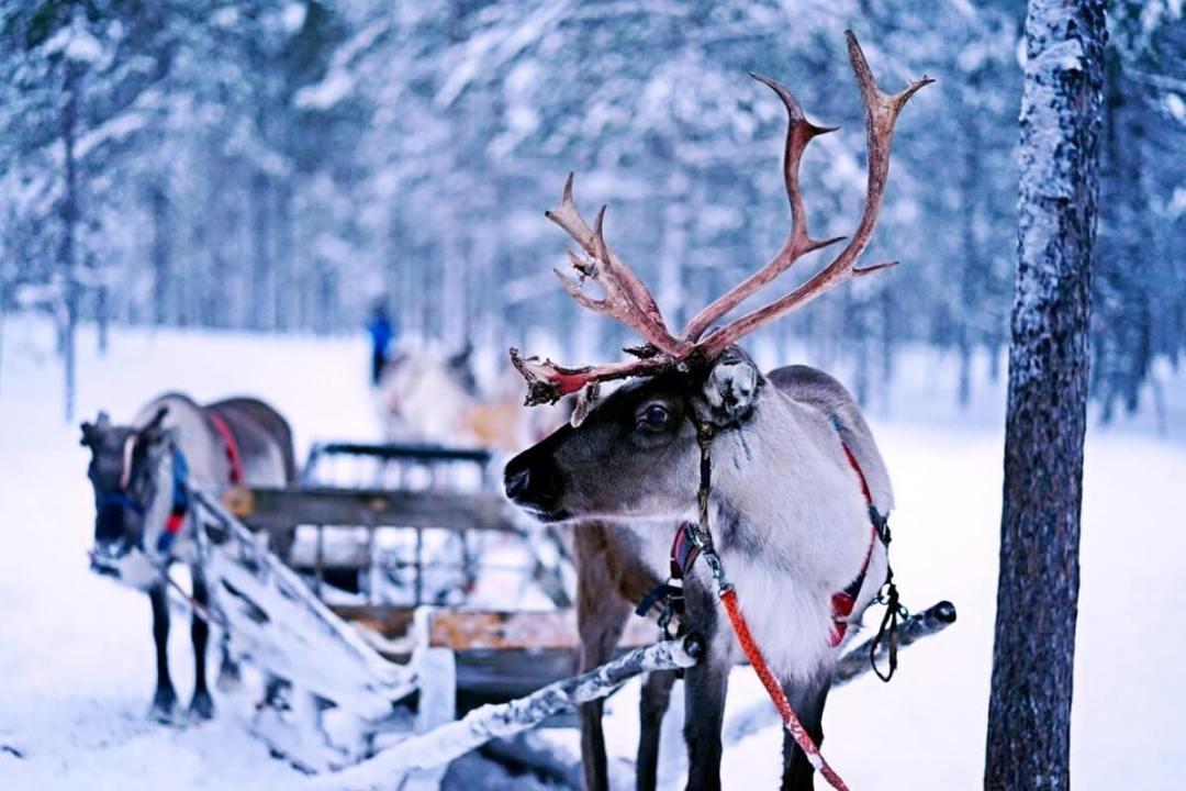 Partir en vacances en Laponie en famille, faire les activités avec les enfants