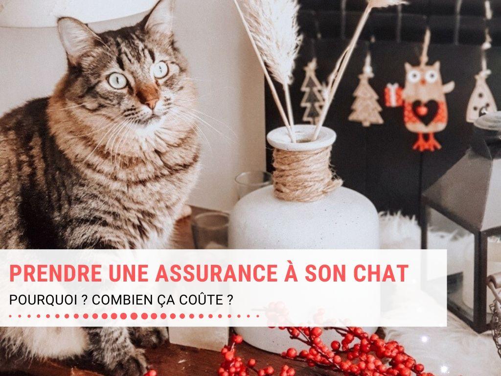 Prendre une assurance à son chat, combien ça coûte ?
