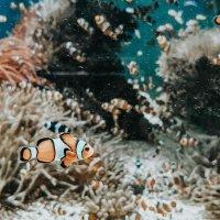 (concours) IMMERSION au Musée Océanographique de Monaco, plonger au cœur de la Grande Barrière de Corail