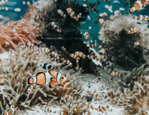 blogtrip influenceurs famille à Monaco : musée océanographique