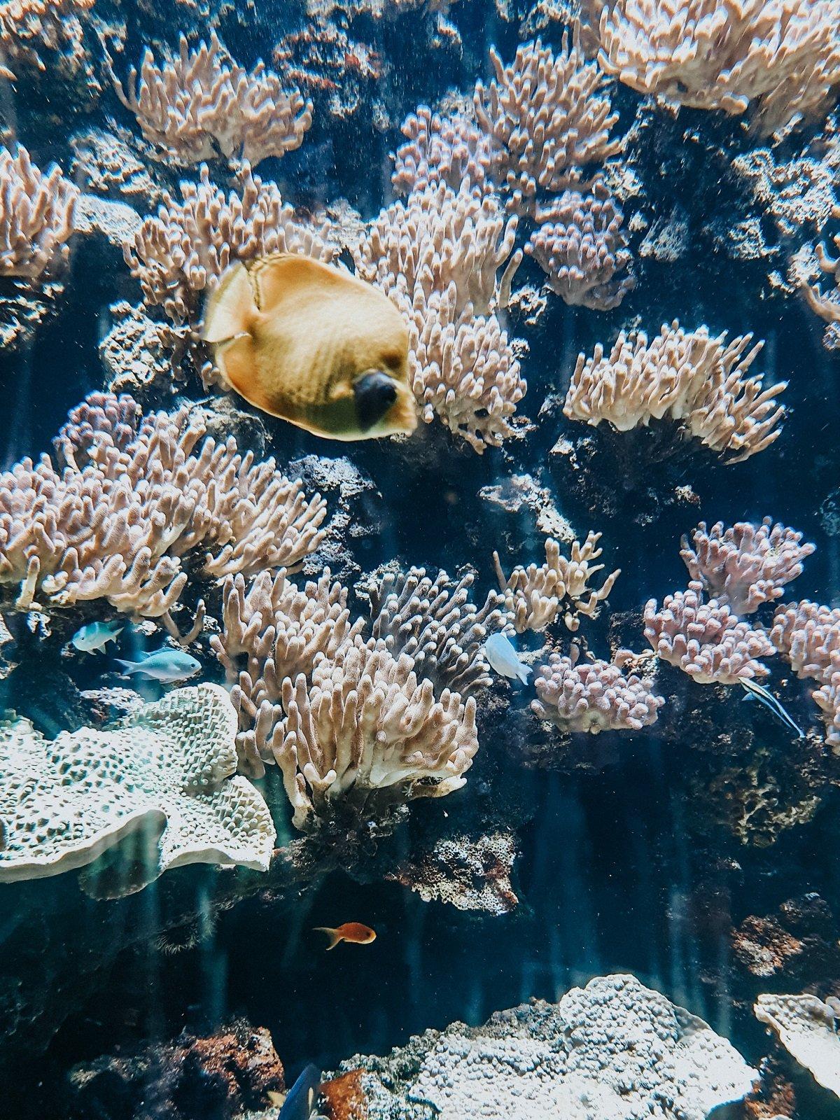 Poisson du musée océanographique de Monaco