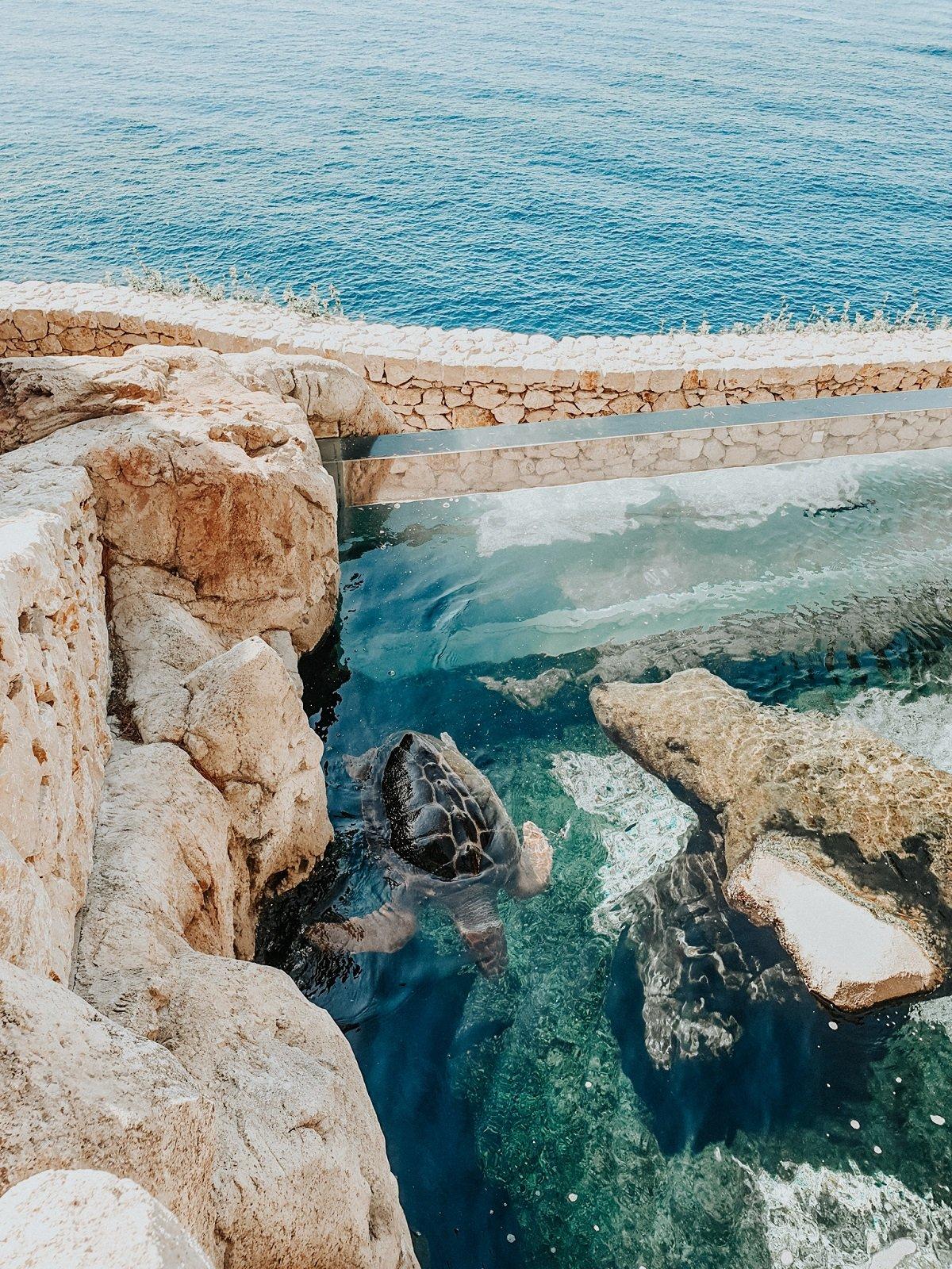 voir les tortues de mer au Musée océanographique de Monaco