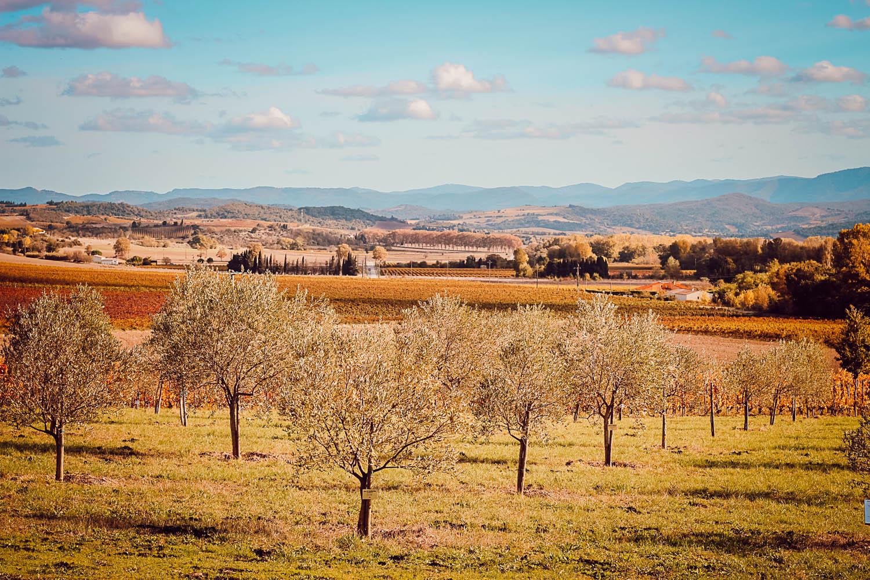 Déjeuner à Brugairolles : Domaine Gayda côté Resto :