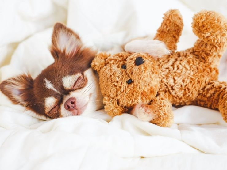 Mélatonine pour le sommeil : bienfaits et risques
