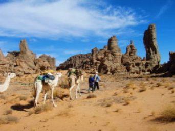 Tuaregové s velbloudy