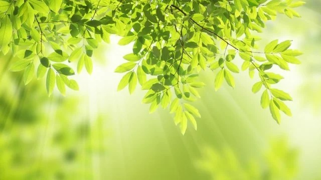 https://i1.wp.com/cestyksobe.cz/wp-content/uploads/2015/04/Evoluce-svit-slunce-skrze-v%C4%9Btve-strom%C5%AF-na-%C5%A1%C3%AD%C5%99ku-640x360.jpg