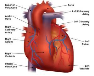 Congestive Heart Failure: The Essence of Heart Failure Course | CEUfast Nursing Continuing Education