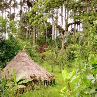 Traditionelle Hütte: Ein Tukul im Wald