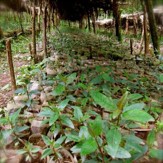 Growing seedlings: Over 40.000 waiting for their new place in the NABU reforestation project