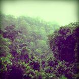 Unterwegs in den Wald