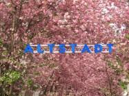 Altstadt in Blütenwölkchen