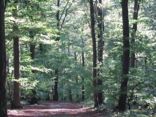 Waldspaziergänge kann man auch in Bonn ganz wunderbar machen: Hier im Siebengebirge. Aber auch der Kottenforst lädt zum Verlaufen ein