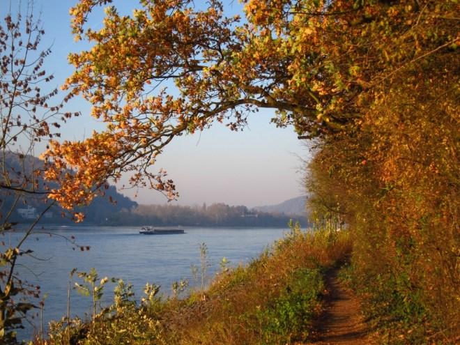 Herbstspaziergänge am Rheinufer