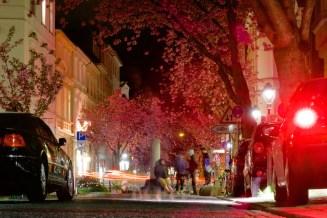 Herumlungernde Bonner unter den Kirschblüten in der Altstadt