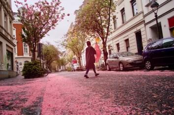 Meistens Mitte April ist die Kirschblütenzeit langsam vorüber und alle Straßen sind Rosa