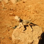 Meditierendes Tierlein in der Wüste