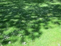 Grüne Frühlingswiese im Park