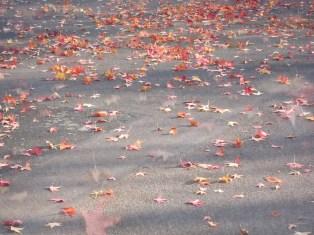 Tanzende Herbstblätter