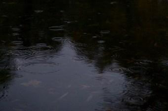 Regentropfen im Teich, November