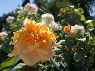 Gelbe Blüte im Sommer