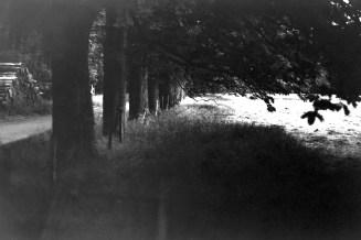 Waldweg/Allee