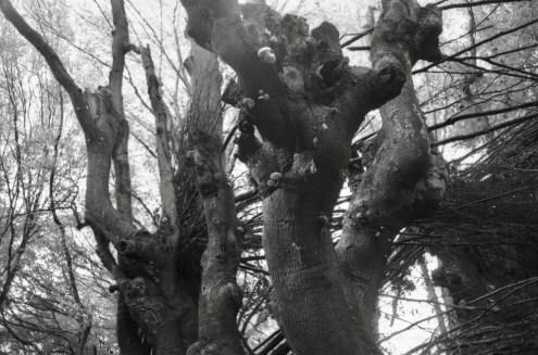 Verwachsene Bäume und Baumpilze