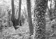 Mit Infrarot-Film im Kottenforst