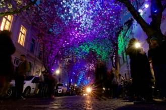 Licht Installation des Künstlers Ali Monzavi zur Kirschblüte in Bonn
