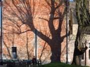 Tree shadow in Brugge