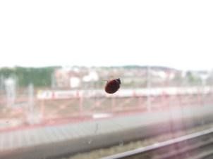 Brüssel - ein Marienkäfer ist am Fenster des Thalys aus Paris mitgefahren