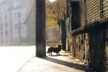 Ein kleiner Hund im Gegenlicht