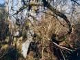 Dickicht bei der Ordensburg Vogelsang in der Eifel