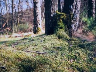 Bemoostes Fleckchen Wald
