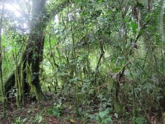 Nebelwald in Äthiopien