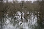 Hochwasser in den Siegauen