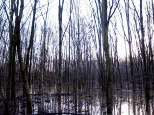 Ein Wald unter Wasser - Bäume können teilweise mehrere Wochen unter Wasser stehen bis sie absterben.