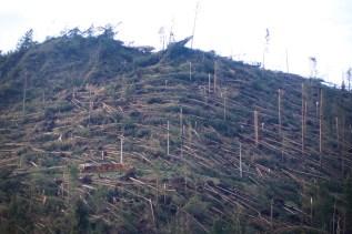 Vom Sturm umgeworfene Wälder in den Dolomiten.