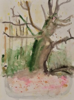 Altes und totes Holz - Aquarell, 36 x 48 cm