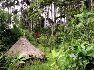 Eine Hütte im Wald in Kaffa, Äthiopien