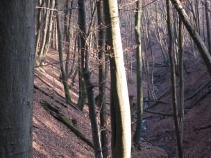 Am Anfang des Neuen Jahres ist der Wald noch bräunlich und man kann weit sehen.