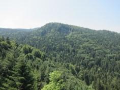 Bewaldete Eifel im Sommer