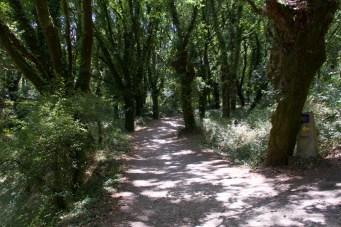 Ein Pilgerweg durch den Wald