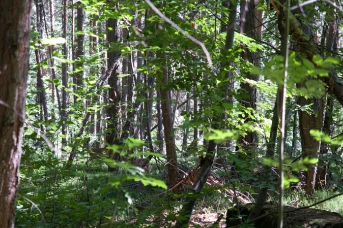 Ein Reh versteckt sich im Unterholz