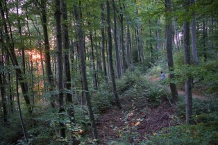 Im Friedwald am Bodensee